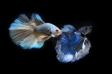 fight fish Stock Photo - 28464487