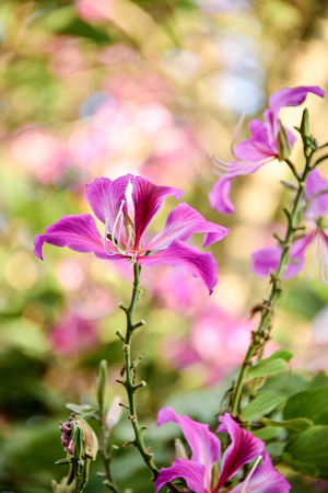 flowers beautiful: Pink flowers beautiful flowers are formed.