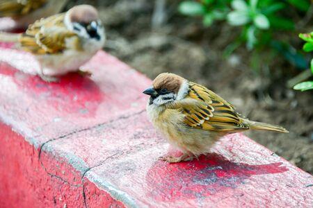 Sparrows in Hong Kong Park