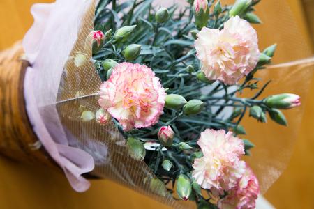clavel: Carnation