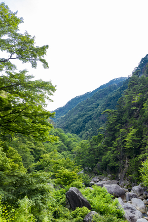 waterfall, green, Stock Photo