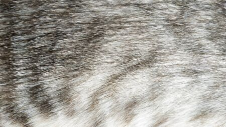 Texture cat's coat. Natural background. Stains.