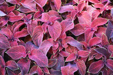 Background of red leaves. Banco de Imagens