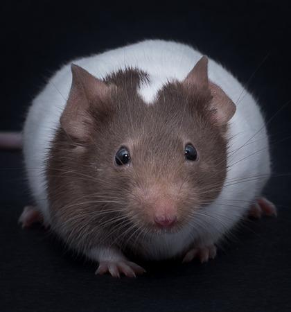 高級マウス