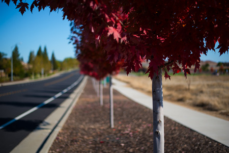 roadway: Tree Lined Roadway and Sidewalk Stock Photo