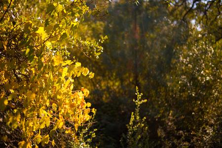 秋の葉や木 写真素材
