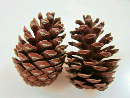 isolated: Pine cones isolated on white background.