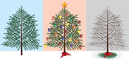 arbre     ? � feuillage persistant: Evergreen arbre avant, pendant et apr�s No�l