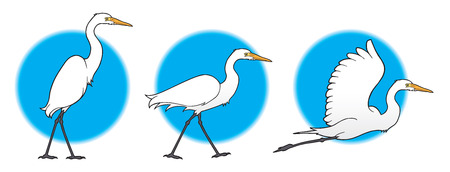 plumed: Great Egret taking off into the air Illustration