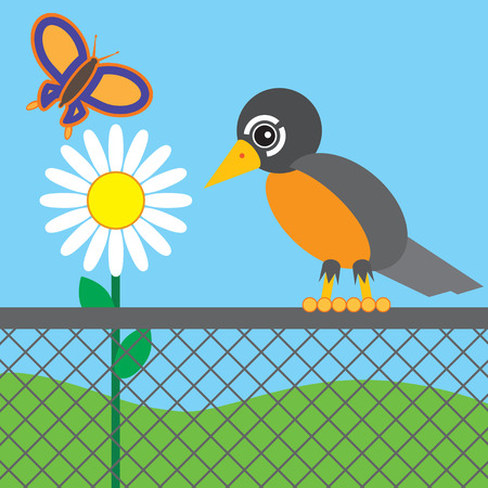 Robin on chain link fence observing butterfly