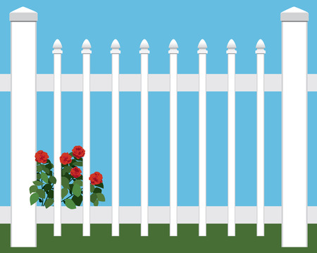 invasive: Roses growing through picket fence