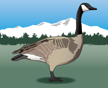 Canada goose standing in field with trees and mountains in background Ilustração