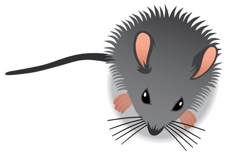sniff: Aerial view of curious baby mouse Illustration