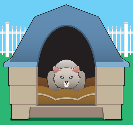 decides: A kitty decides the doghouse belongs to her now