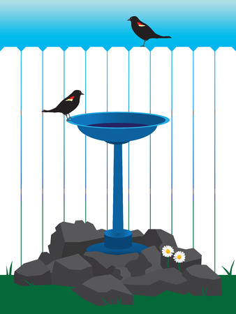 Two blackbirds enjoying a backyard bird bath