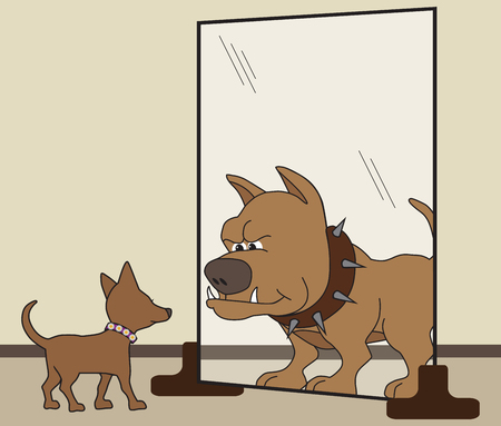 Small dog sees himself as big and tough in the mirror