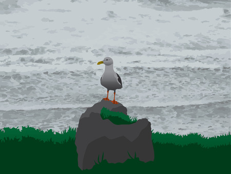 Seagull resting on a rock near the ocean
