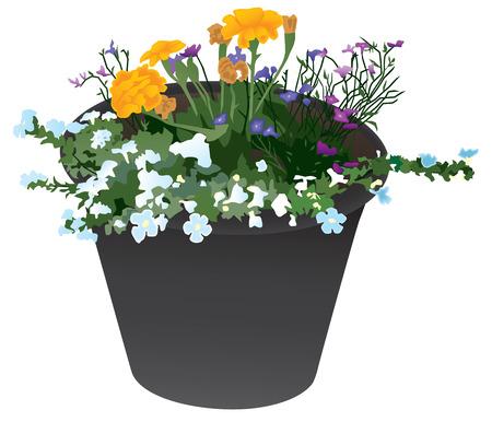 여러 종류의 꽃과 검은 꽃 재배자.