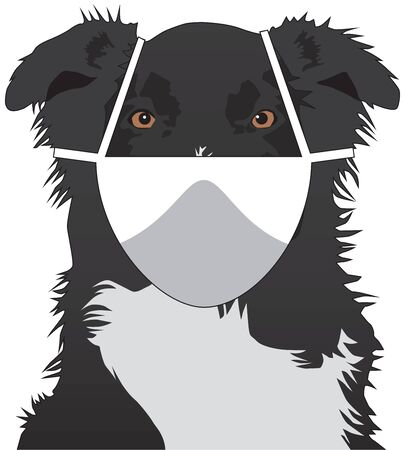 An Australian Shepherd is wearing a safety mask and looking at the viewer