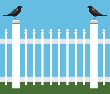 Two similar birds are standing on fence posts staring at each other