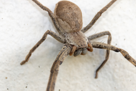 A close up view of a very large spider making a web on a outdoor white concrete wall
