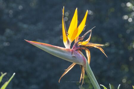 A close up view of the top of a strelitzia flower