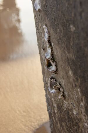 A close up view of barnacles on the side of a concrete piller on the beach
