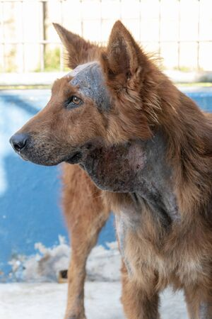 A close up view of a dog that has very bad skin and has been shaved and being treated at the clinic