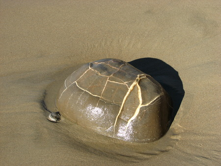 cognate: Stone seems carapace of a turtle.