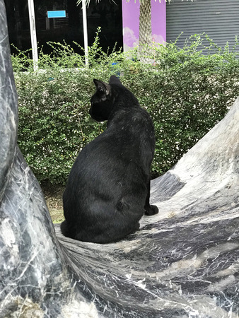 A black cat is sitting on the big rock.