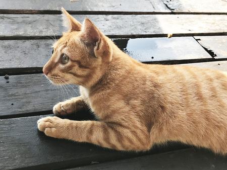 A cute golden tabby cat. Stock fotó