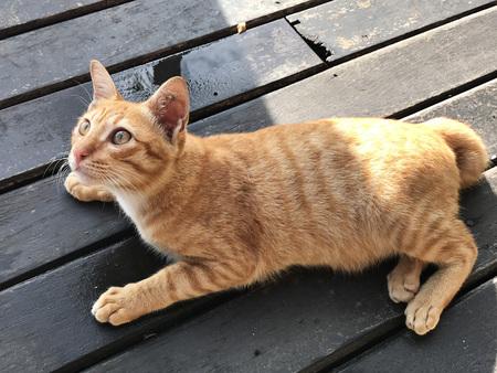 A cute golden tabby cat. Stock Photo