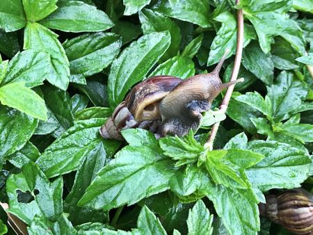 Snail in the garden. Stock Photo