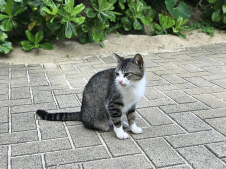 A cute black and white tabby cat.