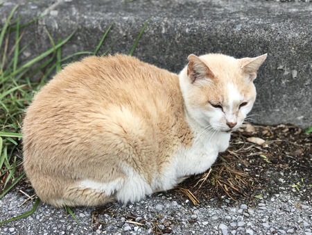A white and brown cat is sitting on the ground and close its eyes.