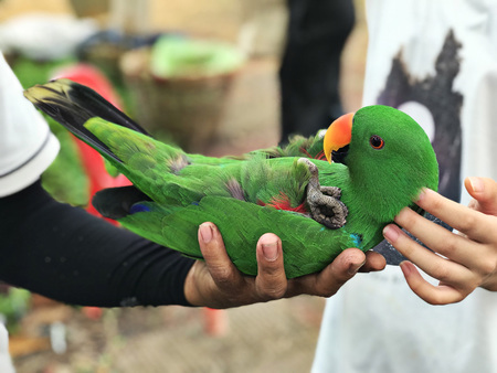 A cute Psittacines or Parrot bird. Stockfoto