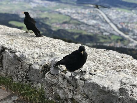 Crows on the top of Innsbruck, Austria.