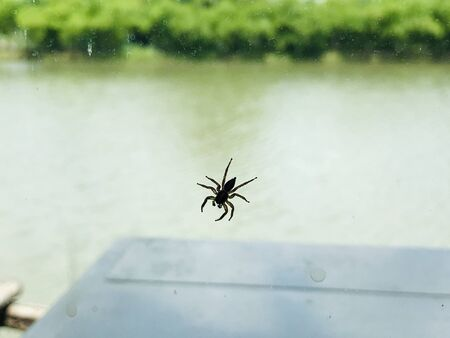 A little spider on the glass mirror.