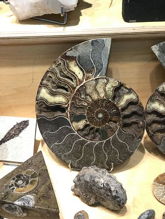 Gorgeous sliced Ammonite fossil in the showcase at Austria.