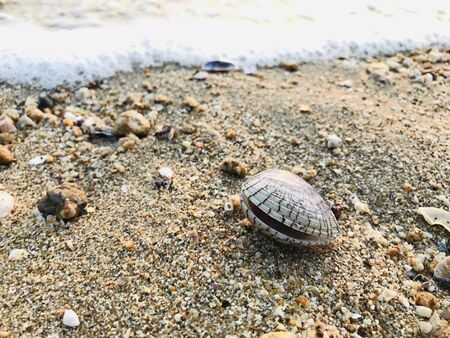 A beautiful and outstanding shell on Pattaya beach in Chonburi, Thailand.