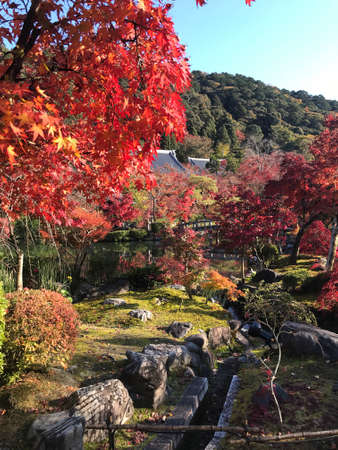 Kyoto, Japan - December 1, 2019: Colorful maple leaves in autumn at Eikando (Zenrinji) Temple. The temple has a variety of buildings and a pond garden that very famous for its autumn colors.