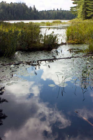 algonquin park: Reflections in a swamp in Algonquin Park