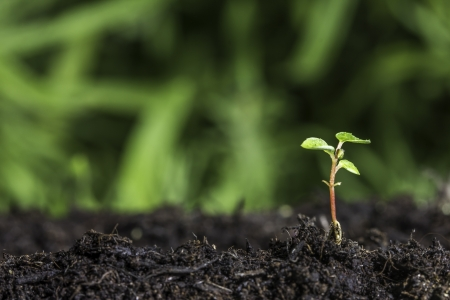 Close up of a new seedling sprouting from the ground with vivid green bokeh background