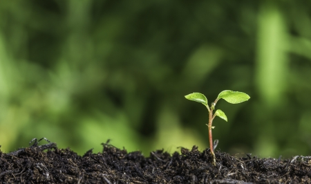 saplings: Close up of a young plant sprouting from the ground with green bokeh background Stock Photo