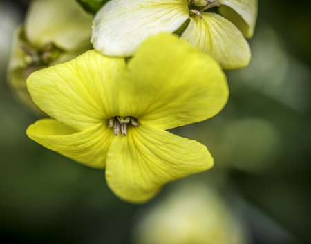 Closeup of a Yellow Flower With Green Bokeh Background photo