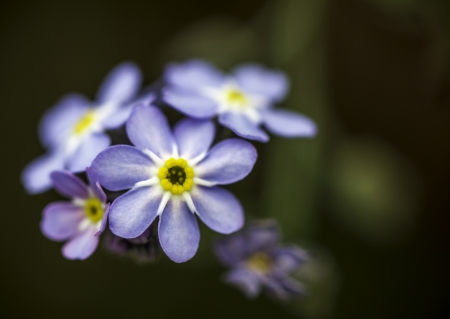 Closeup of a Pretty Blue Purple and Yellow Flower with Dark Green Bokeh Background Zdjęcie Seryjne
