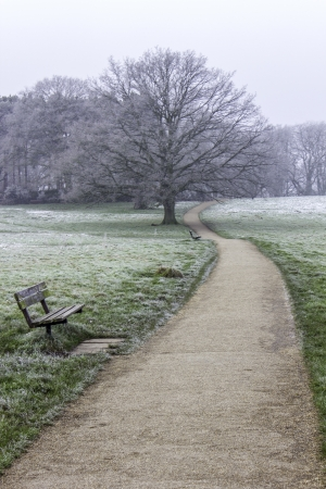 A view along a path in a park or heath on a frosty winters morning