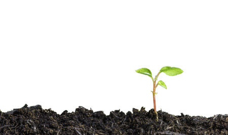 new start: Close up of a young plant sprouting from the ground on white background Stock Photo