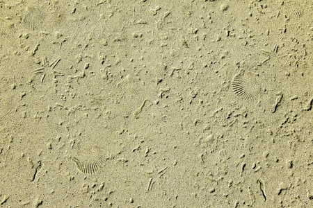 Sand and sea shell fossil texture ideal for a sea fish or beach themed background