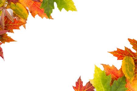 hojas parra: Marco de fondo de otoño colorido aislado deja parte superior izquierda y la esquina inferior derecha perfecta para una fiesta o una boda invitar o tarjeta Foto de archivo